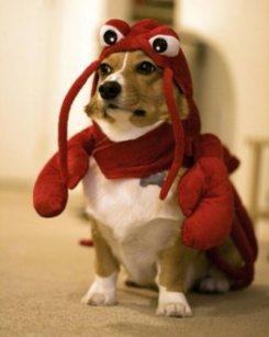 DIVISÃO: O líder udenocanino, sr. Cachorro-Lagosta, acusa o pitta de estimação do pres. Zezinho de querer pegar para ele todos os potinhos de ração e panelas de sopão.