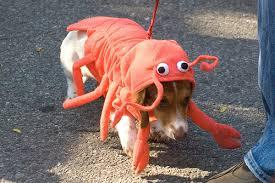 DECEPCIONADO: O líder da ala canina da UDN saiu cabisbaixo da manifestação animalesca.